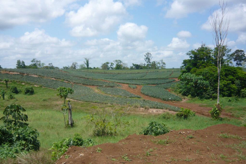 Hacienda Mindoro
