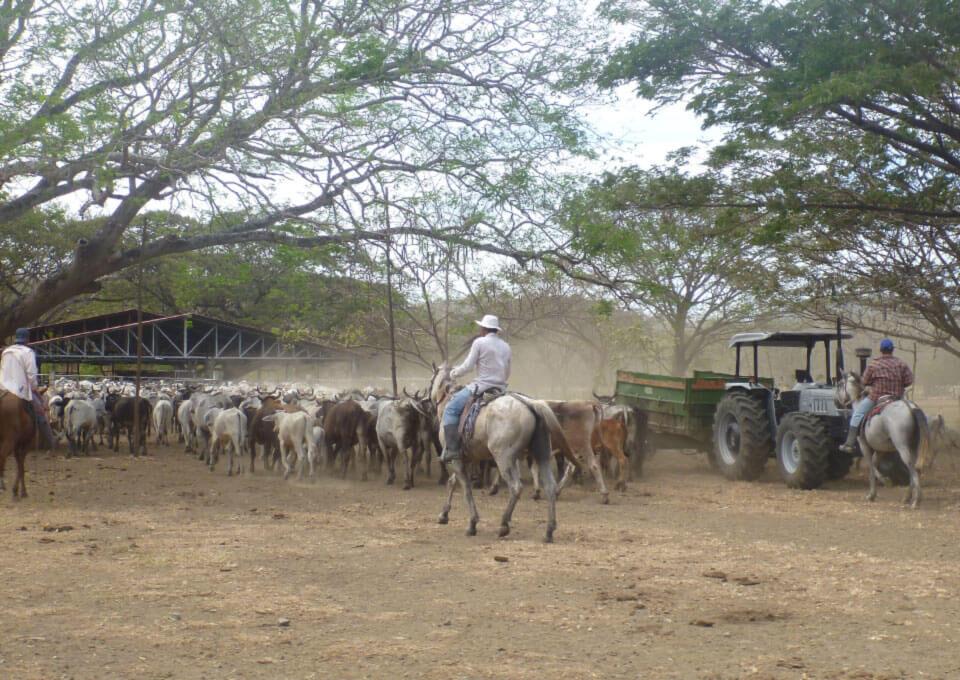 Quintas Rancho Humo